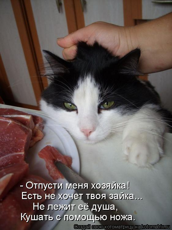 Котоматрица: - Отпусти меня хозяйка! Есть не хочет твоя зайка... Не лежит её душа, Кушать с помощью ножа.
