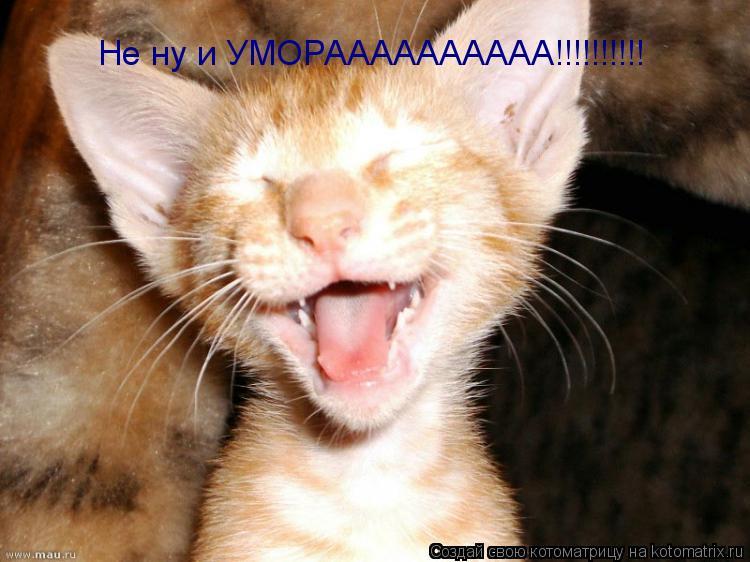 Котоматрица: Не ну и УМОРАААААААААА!!!!!!!!!!