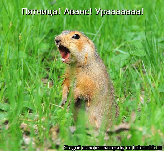Котоматрица: Пятница! Аванс! Урааааааа!
