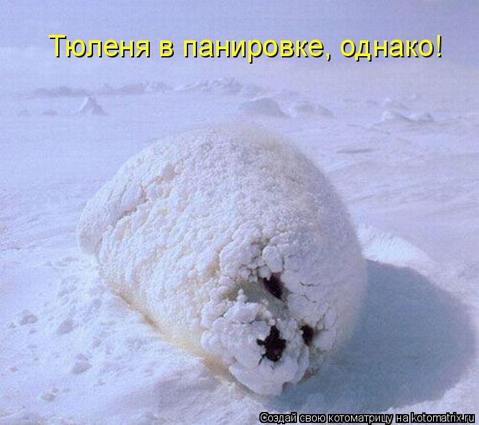 Котоматрица - Тюленя в панировке, однако!