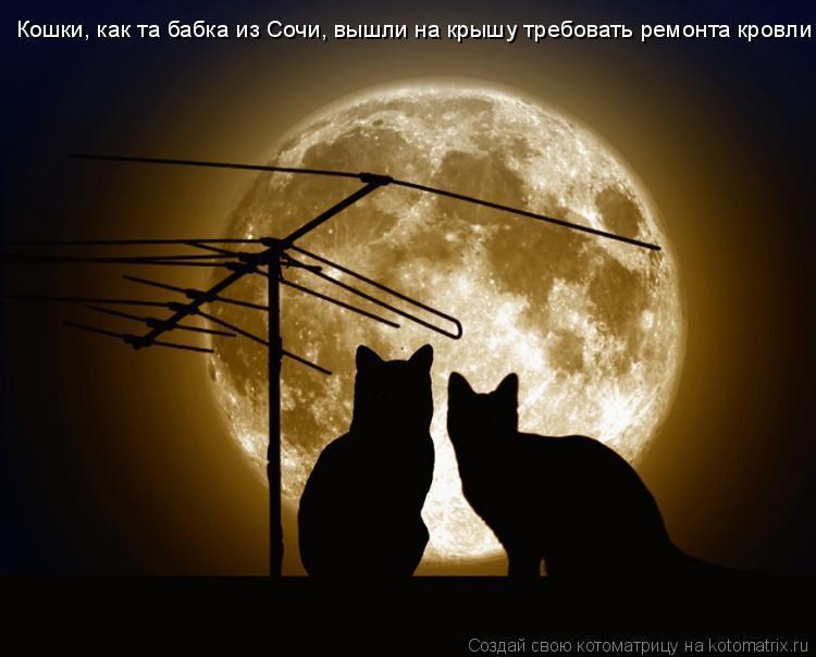 Котоматрица: Кошки, как та бабка из Сочи, вышли на крышу требовать ремонта кровли