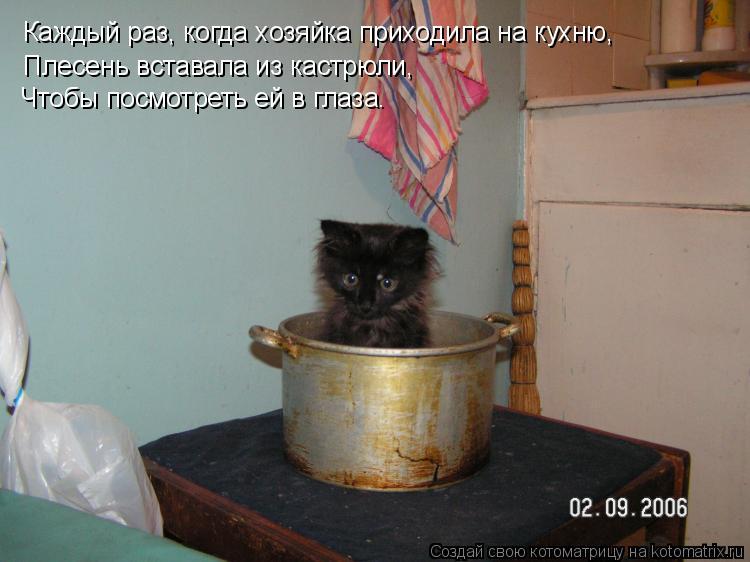 Котоматрица: Каждый раз, когда хозяйка приходила на кухню,   Плесень вставала из кастрюли,  Чтобы посмотреть ей в глаза.
