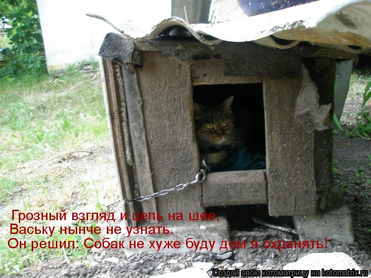 Котоматрица: Грозный взгляд и цепь на шее, Ваську нынче не узнать. Он решил: Собак не хуже буду дом я охранять!