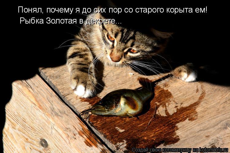 Котоматрица: Понял, почему я до сих пор со старого корыта ем! Рыбка Золотая в декрете...