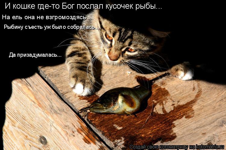 Котоматрица: И кошке где-то Бог послал кусочек рыбы... На ель она не взгромоздясь... Рыбину съесть уж было собралась... Да призадумалась...
