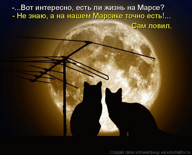 Котоматрица: -...Вот интересно, есть ли жизнь на Марсе? - Не знаю, а на нашем Марсике точно есть!... Сам ловил.