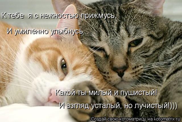 Котоматрица: И умилённо улыбнусь... И умилённо улыбнусь... К тебе  я с нежностью прижмусь, Какой ты милый и пушистый! И взгляд усталый, но лучистый!)))