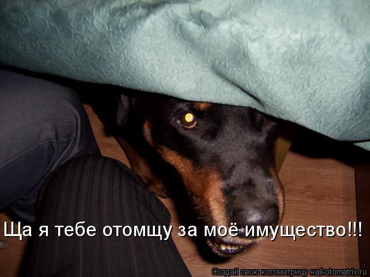 Котоматрица: Ща я тебе отомщу за моё имущество!!!