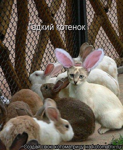 Котоматрица: Гадкий котенок