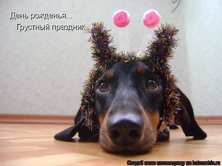 Котоматрица: День рожденья... Грустный праздник...