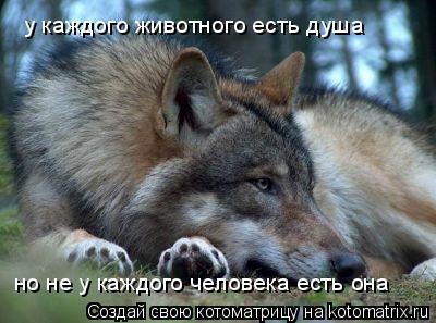 Котоматрица: у каждого животного есть душа но не у каждого человека есть она