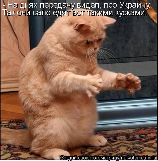 Winx Битва Питомцев, раунд №3!
