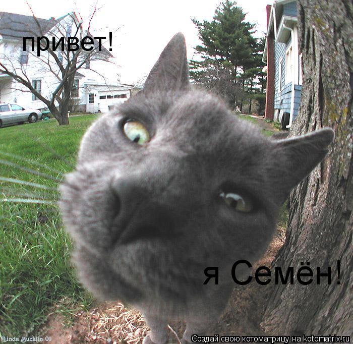 Котоматрица: привет! я Семён!