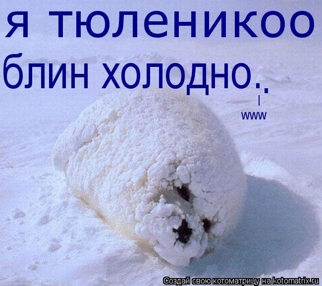 Котоматрица: я тюленикоо блин холодно. . l www