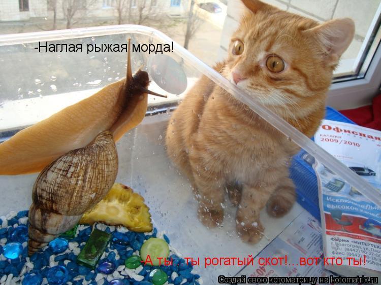 http://kotomatrix.ru/images/lolz/2010/10/26/717420.jpg