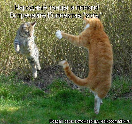 """Котоматрица: Народные танцы и пляски! Встречайте:Коллектив """"коты"""""""