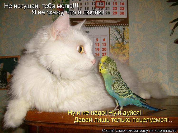 Котоматрица: Не искушай, тебя молю!!! Я не скажу, что я люблю! Ну и не надо! Ну и дуйся! Давай лишь только поцелуемся!..