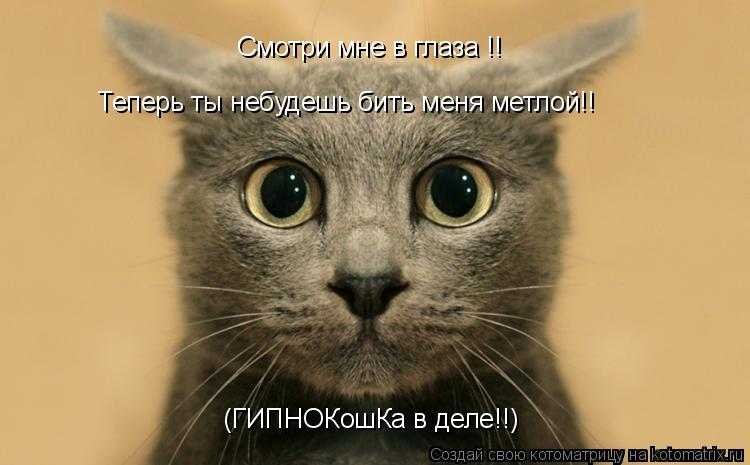 Котоматрица: Смотри мне в глаза !! Теперь ты небудешь бить меня метлой!! (ГИПНОКошКа в деле!!)