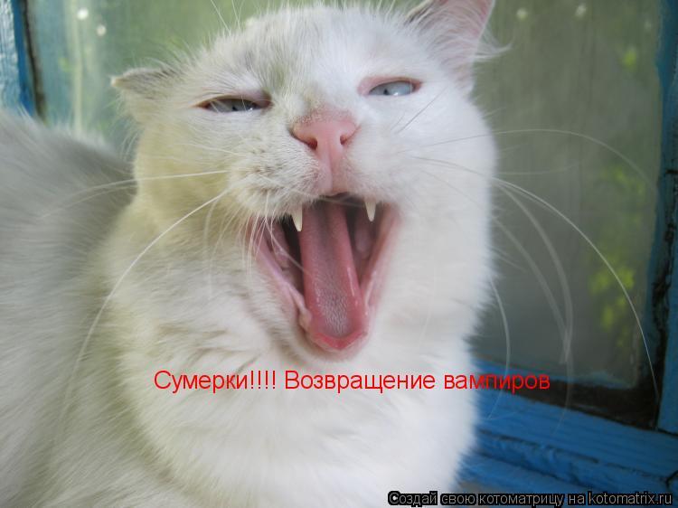 Котоматрица: Сумерки!!!! Возвращение вампиров Сумерки!!!! Возвращение вампиров