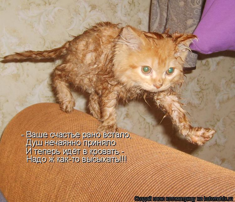 Котоматрица: - Ваше счастье рано встало, Душ нечаянно приняло И теперь идёт в кровать - Надо ж как-то высыхать!!!