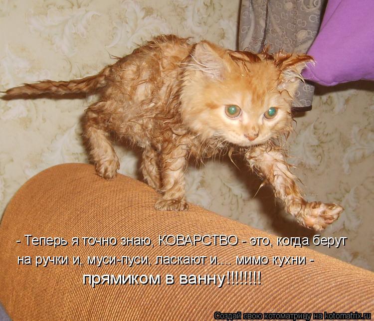 Котоматрица: - Теперь я точно знаю, КОВАРСТВО - это, когда берут  на ручки и, муси-пуси, ласкают и.... мимо кухни - прямиком в ванну!!!!!!!!