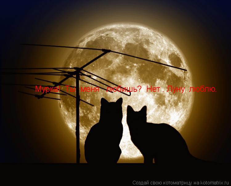 Котоматрица: Мурка!  Ты  меня   любишь?  Нет . Луну  люблю.