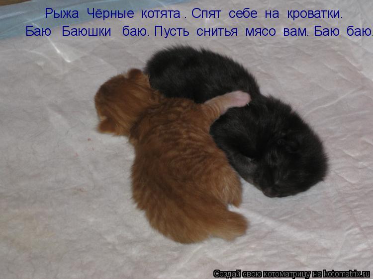 Котоматрица: Рыжа  Чёрные  котята . Спят  себе  на  кроватки. Баю   Баюшки   баю. Пусть  снитья  мясо  вам. Баю  баю.