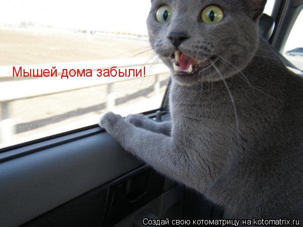 Котоматрица: Мышей дома забыли!