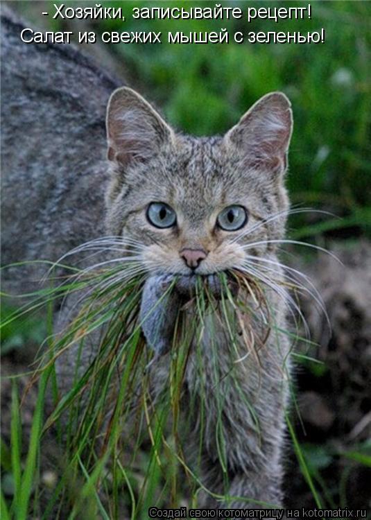 Котоматрица: - Хозяйки, записывайте рецепт! Салат из свежих мышей с зеленью!