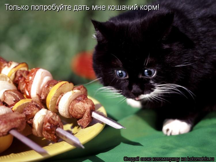 Котоматрица: Только попробуйте дать мне кошачий корм!