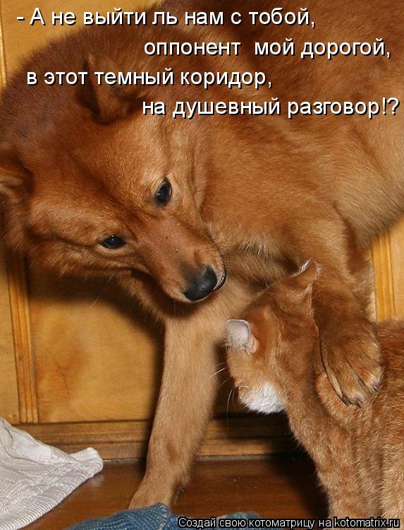 Котоматрица: - А не выйти ль нам с тобой, оппонент  мой дорогой, в этот темный коридор, на душевный разговор!?