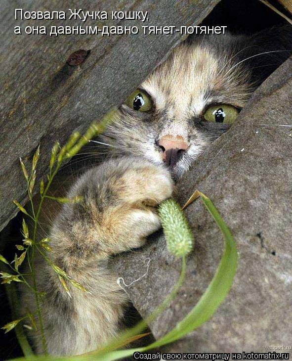 Котоматрица: Позвала Жучка кошку, а она давным-давно тянет-потянет
