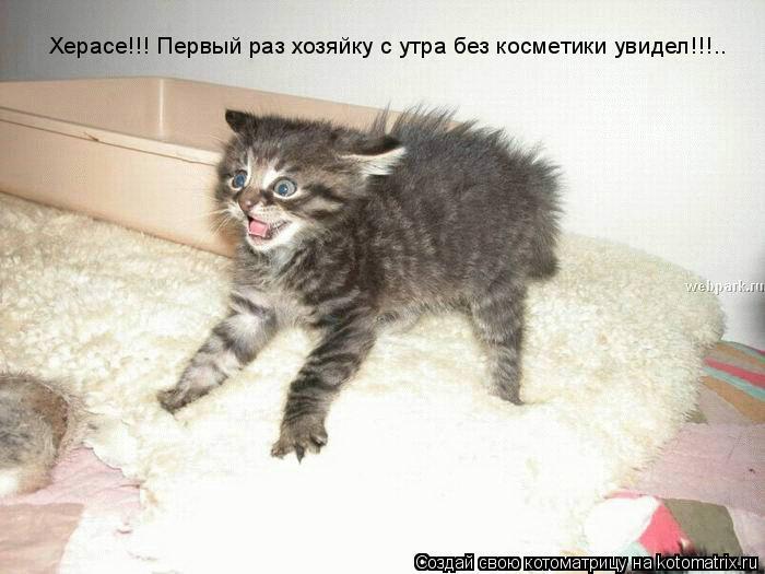 Котоматрица: Херасе!!! Первый раз хозяйку с утра без косметики увидел!!!..