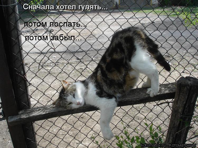 Котоматрица: Сначала хотел гулять... потом поспать... потом забыл...