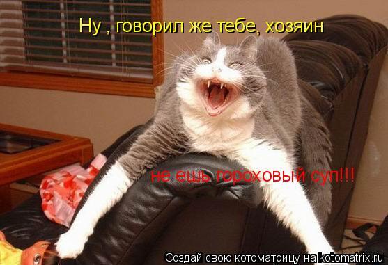 Котоматрица: Ну , говорил же тебе, хозяин, не ешь гороховый суп! Ну , говорил же тебе, хозяин не ешь гороховый суп!!!