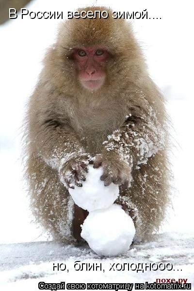 Котоматрица: В России весело зимой.... но, блин, холоднооо...