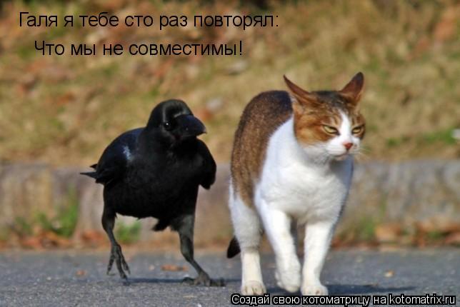 Котоматрица: Галя я тебе сто раз повторял: Что мы не совместимы!