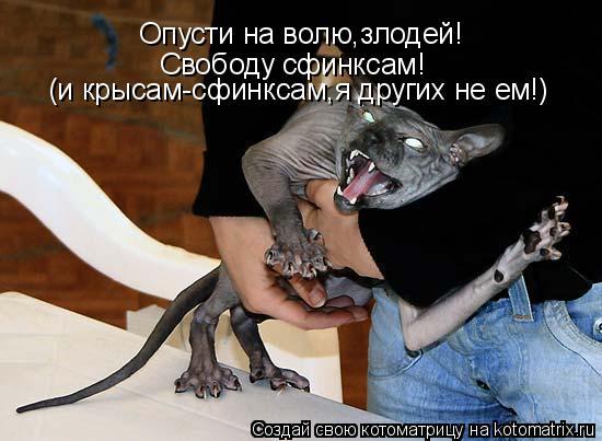 Котоматрица: Опусти на волю,злодей! Свободу сфинксам! (и крысам-сфинксам,я других не ем!)