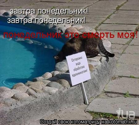 Котоматрица: завтра понедельник! завтра понедельник! понедельник это смерть моя!!