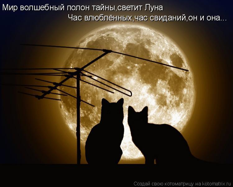 Котоматрица: Мир волшебный полон тайны,светит Луна Час влюблённых,час свиданий,он и она...