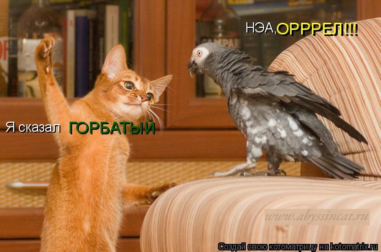 Котоматрица: Я сказал ГОРБАТЫЙ НЭА, ОРРРЕЛ!!! ОРРРЕЛ!!!