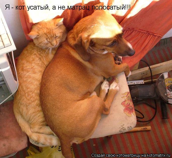 Котоматрица: Я - кот усатый, а не матрац полосатый!!!