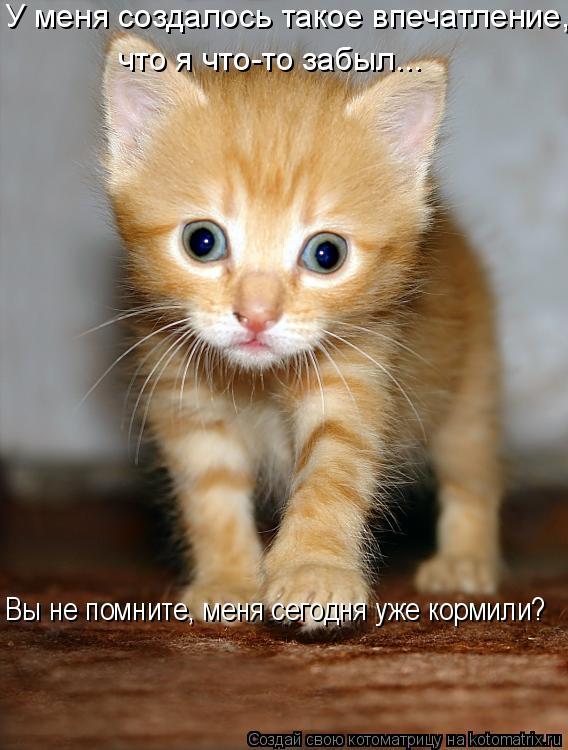 Котоматрица: У меня создалось такое впечатление,  что я что-то забыл...  Вы не помните, меня сегодня уже кормили?