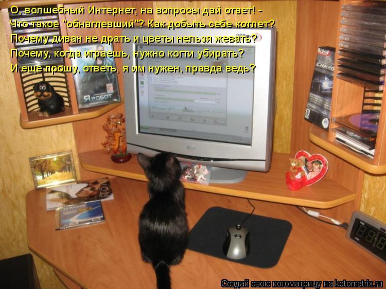 """Котоматрица: О, волшебный Интернет, на вопросы дай ответ! - Что такое """"обнаглевший""""? Как добыть себе котлет? Почему диван не драть и цветы нельзя жевать? По"""