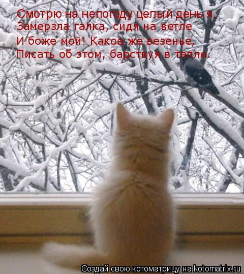 Котоматрица: Замерзла галка, сидя на ветле И боже мой! Какое же везенье, Смотрю на непогоду целый день я, Писать об этом, барствуя в тепле.