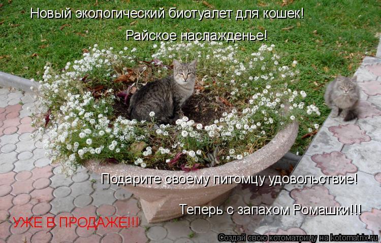 Котоматрица: Райское наслажденье! Теперь с запахом Ромашки!!! Подарите своему питомцу удовольствие! УЖЕ В ПРОДАЖЕ!!! Новый экологический биотуалет для ко