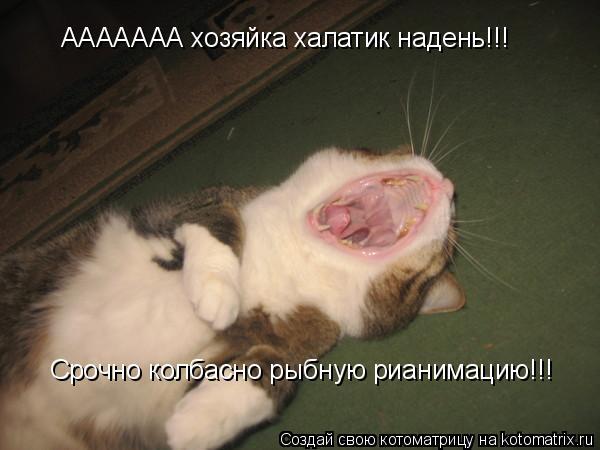 Котоматрица: ААААААА хозяйка халатик надень!!! Срочно колбасно рыбную рианимацию!!!