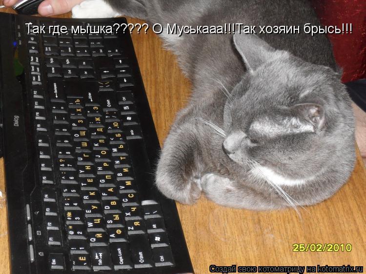 Котоматрица: Так где мышка????? О Муськааа!!!Так хозяин брысь!!!