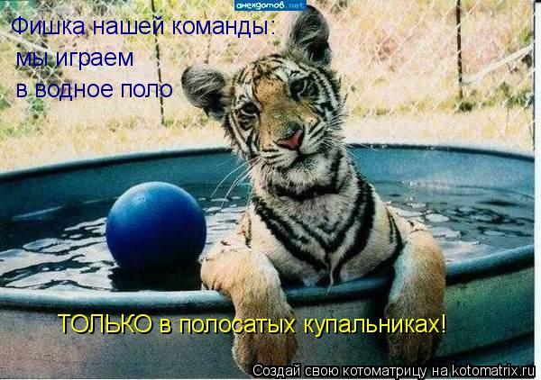 Котоматрица: Фишка нашей команды: мы играем  в водное поло ТОЛЬКО в полосатых купальниках!