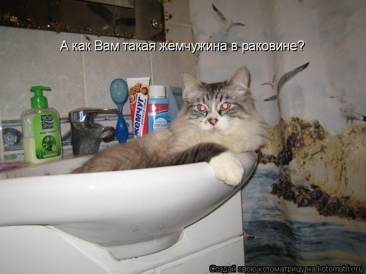 Котоматрица: А как Вам такая жемчужина в раковине?